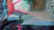 Gdansko zoologijos sodas