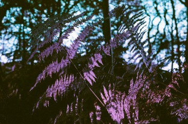 Lomo Purple-2