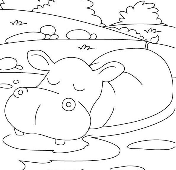Hippo Coloring Pages 360coloringpages