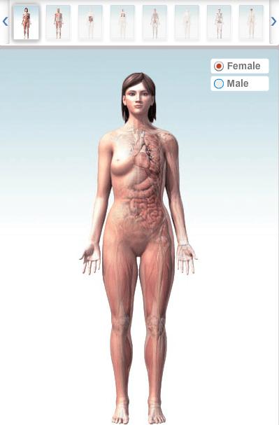 Organele corpului uman 3d