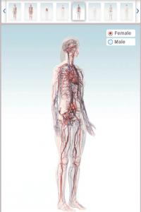 animatie 3D a corpului uman -sistemul circulator