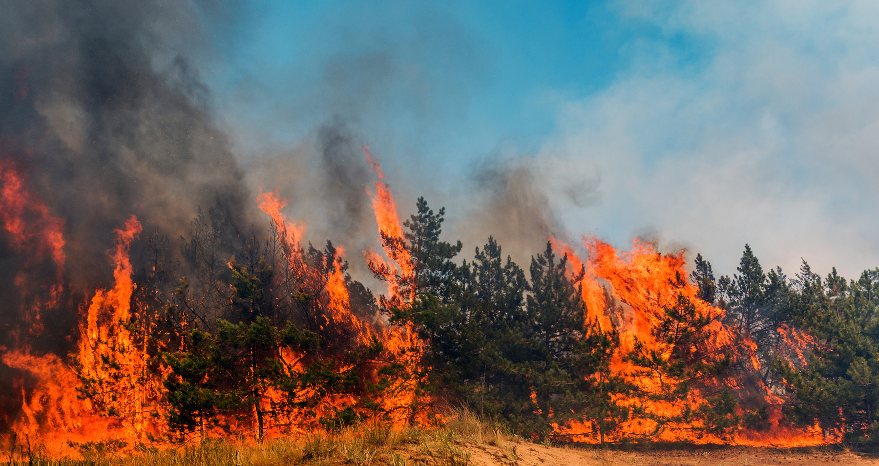 wildfire burning trees and grass on property
