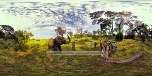 Chris-du-Plessis-Elephant-Pano-4000 x 2000