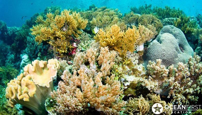 Ocean-First-CoralREV