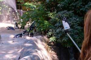 360Rize 360Penguin At The Penguin Exhibit