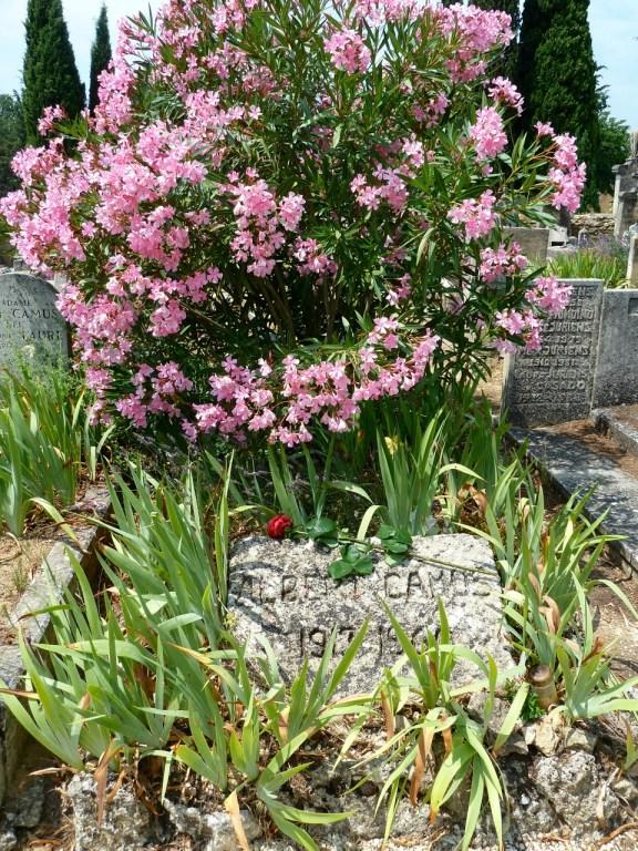 Das Grab von Albert Camus auf dem Friedhof von Lourmarin. Im Juni blüht dort der Oleander. ©Foto: Anne-Kathrin Reif