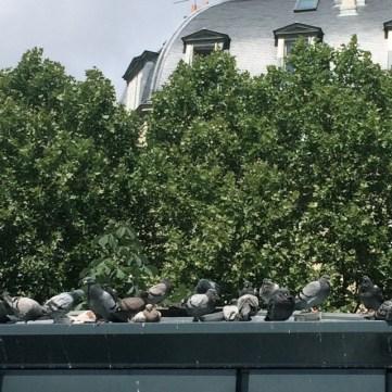 Tauben- Dach