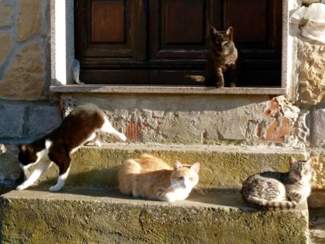 Katzen©Anne-Kathrin Reif