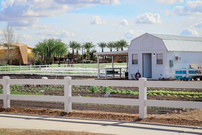 Fields at Steadfast Farm, Mesa, AZ.