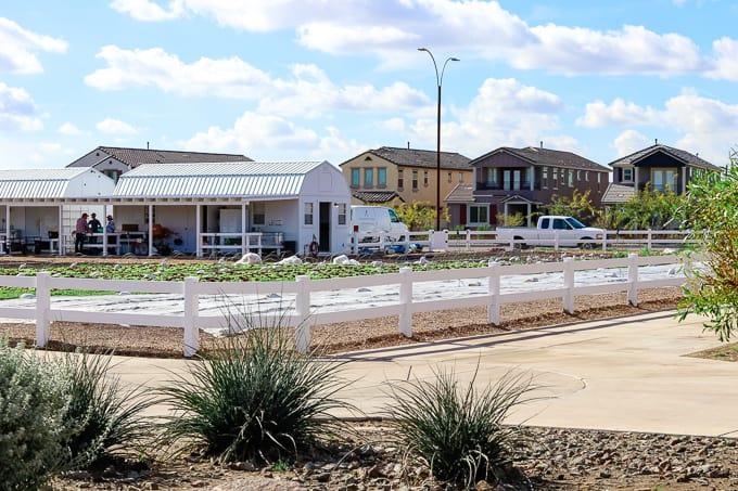 Homes across the street from Steadfast Farm, Mesa, AZ.