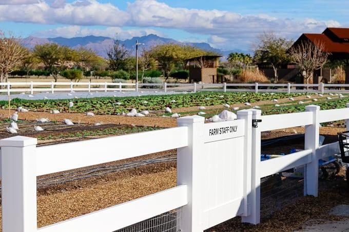 Mountain views at Steadfast Farm, Mesa, AZ.