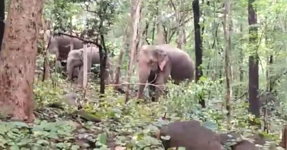 हाथियों का दल फसल के साथ घरों को पहुंचा रहा नुकसान