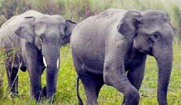 हाथियों ने 2 व्यक्तियों को कुचलकर मार डाला