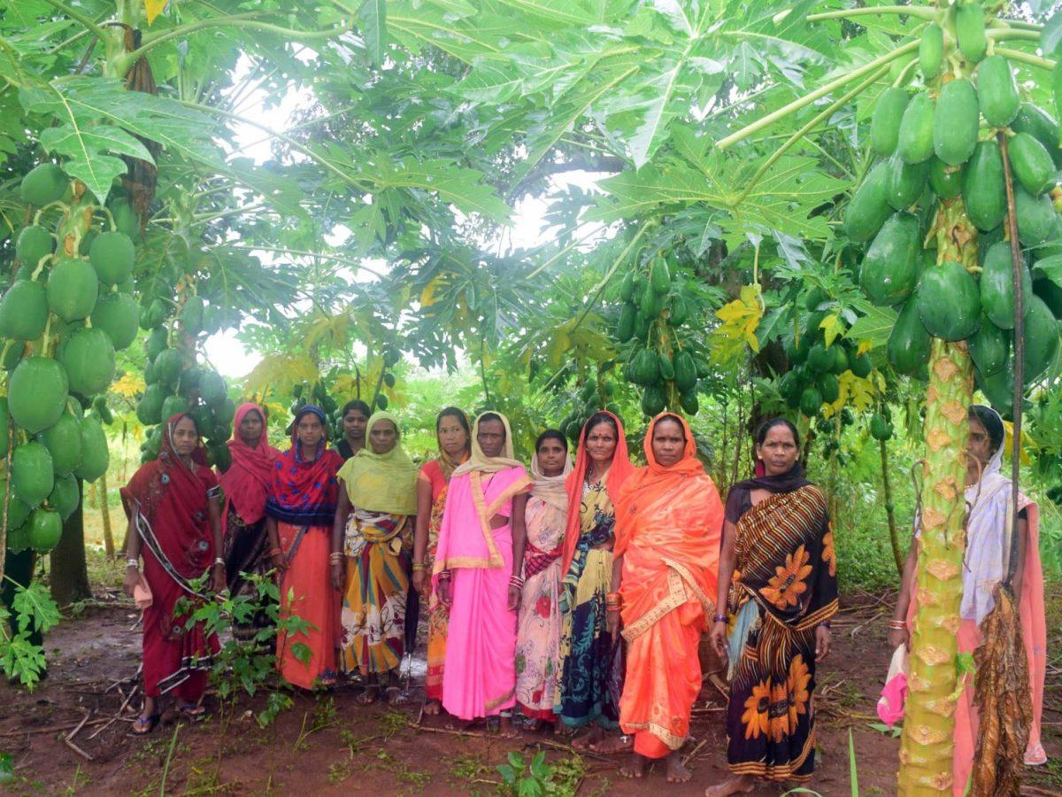 समूह की महिलाओं ने पपीता की पहली फसल कुपोषित बच्चों को दी