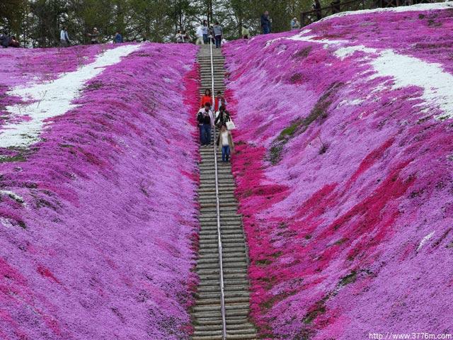 芝ザクラ階段/北海道東藻琴