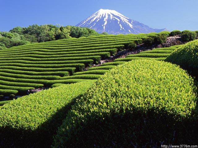 茶畑の丘/飛鳥寺霊園
