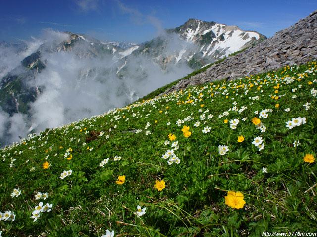 お花畑の稜線/小蓮華岳稜線