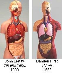 11-anatomical