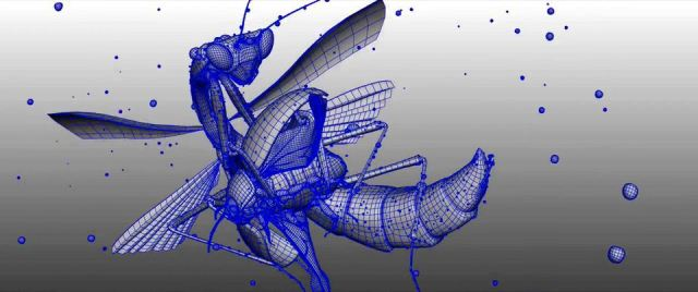 Making-of-Insects