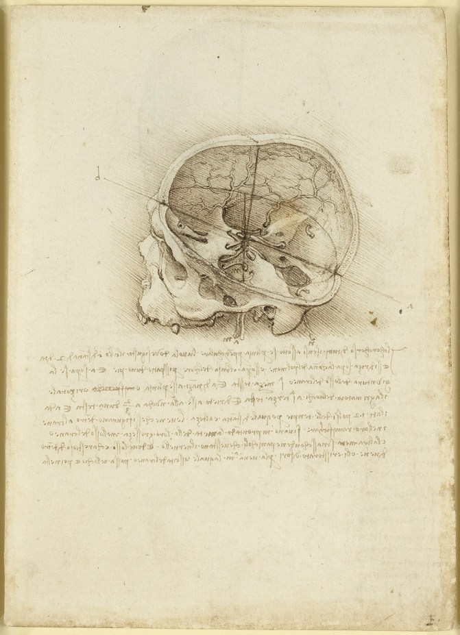 A cranium sectioned. A skull sectioned