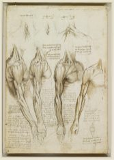 Leonardo da Vinci Anatomy References Shoulders