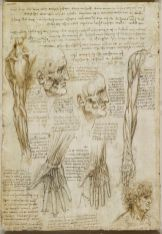 Leonardo da Vinci Anatomy References Muscle