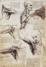 Leonardo da Vinci Anatomy References