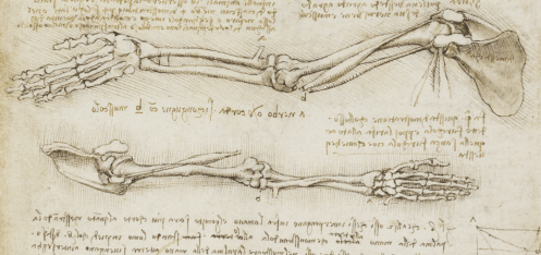 Leonardo da Vinci Anatomy References Bones Skeleton