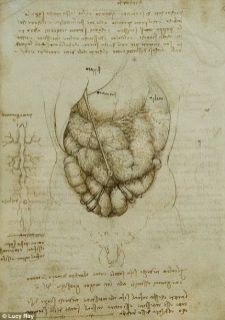 The anatomical study by Leonardo Da Vinci digestive