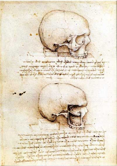 The anatomical study by Leonardo Da Vinci skulls