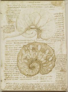 The anatomical study by Leonardo Da Vinci stomac
