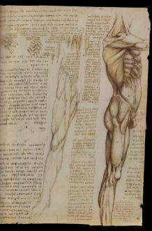The anatomical study by Leonardo Da Vinci the body muscles