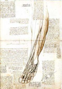 il piede anatomia disegnata da Leonardo Da Vinci