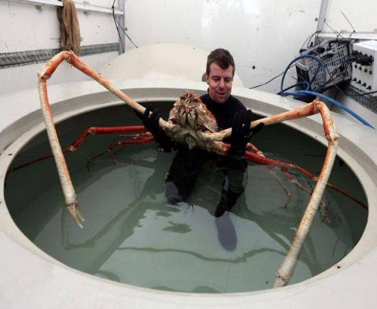 """O que você faria se encontrasse uma """"aranha gigante"""" no fundo do mar?"""