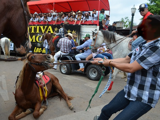 Homem puxa cavalo que está visivelmente cansado (Foto: Rayssa Natani/G1)