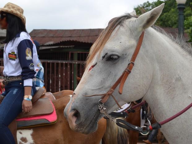 Cavalo está com ferimento na cabeça (Foto: Rayssa Natani/G1)