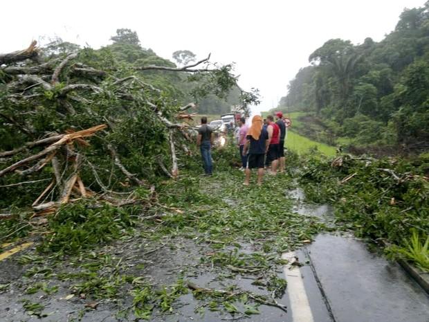 Árvore bloqueou parte da pista (Foto: Jamisson Souza /Arquivo Pessoal)