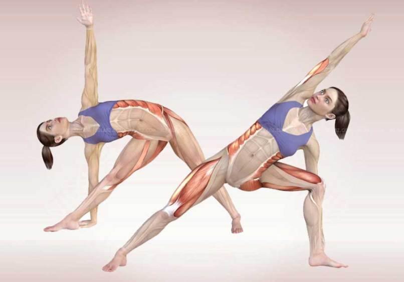 anatomy of yoga poses | Yourviewsite.co