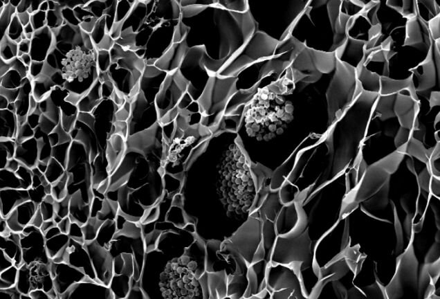 Microscopic view of 3D printed coral structures [Source: Cambridge University]