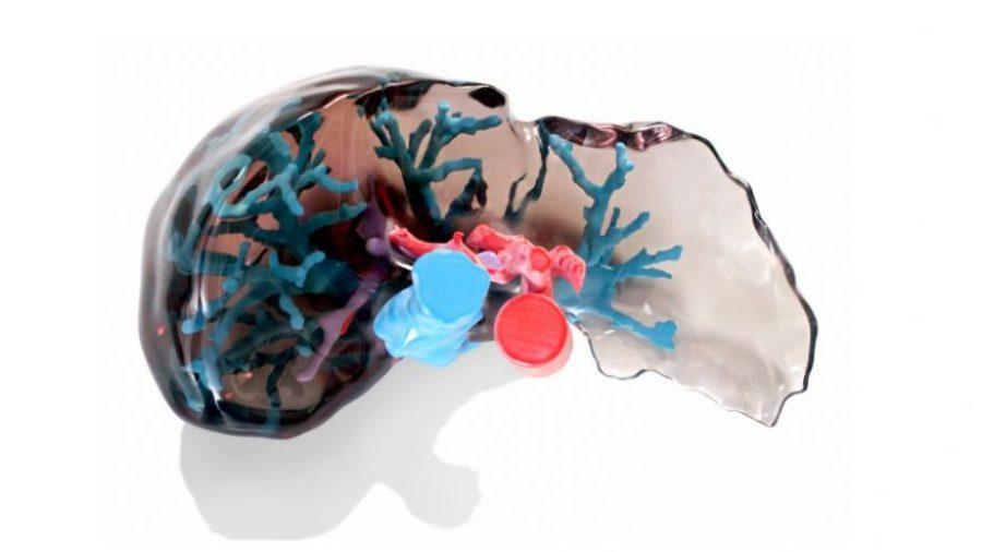 3d printed liver