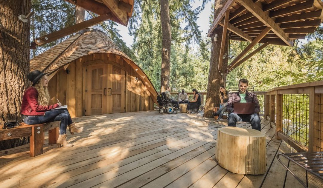 Microsoft builds treehouses