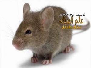 شركة مكافحة الفئران بالرياض
