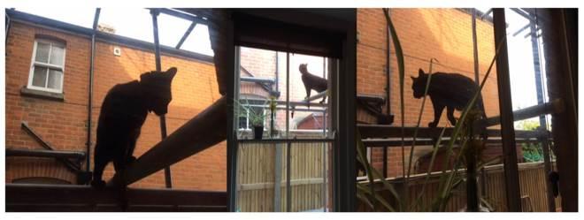Cat on scaffolding