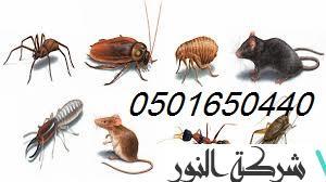 شركة مكافحة حشرات بالحزام الزهبي