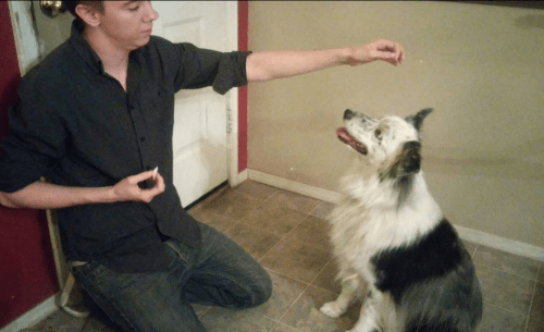 """Notice there's no treat in my """"lure"""" hand. It's in the other hand."""
