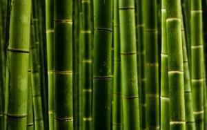 Nigerian bamboo pole for building/TV antenna installation