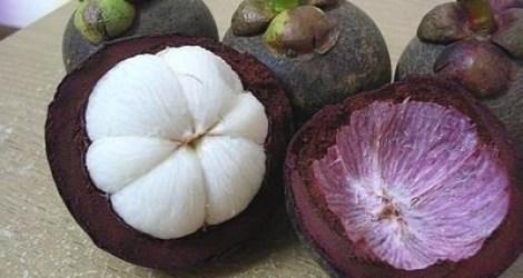 فاكهة المانجوستين الغنية بمضادات الاكسدة
