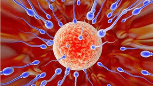 male-infertility-problems