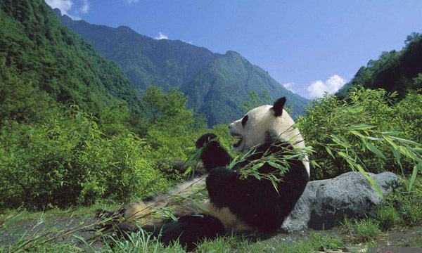 Wolong Natural Reserves Homepage