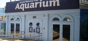 Celebrate Earth Day this Saturday at the Santa Monica Pier Aquarium!